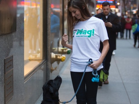 Dog Walker Wag - Palace Pooch Package