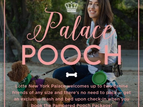 Palace Pooch Package